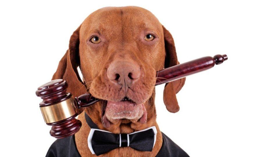 Адвокат по защите животных обязан был